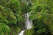 Bajos-del-Toro-Cloud-Forest